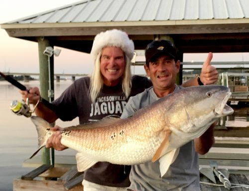 Huge St Johns River Redfish
